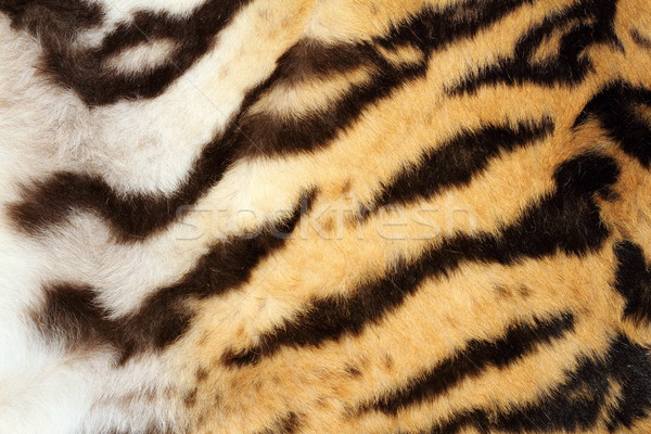 interesting tiger fur detail Stock photo © taviphoto