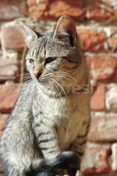 portrait of a young kitty Stock photo © taviphoto