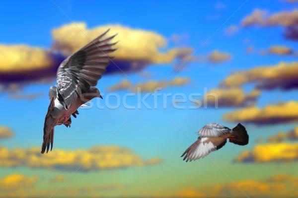 Stock fotó: Repülés · égbolt · gyönyörű · naplemente · háttér · madár
