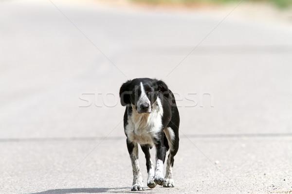 Cão caminhada rua meio-dia feliz preto Foto stock © taviphoto