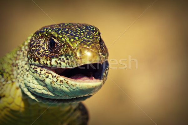 macro view of a green lizard head Stock photo © taviphoto