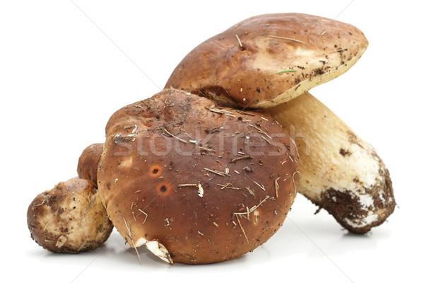 porcini agaric on white background Stock photo © taviphoto