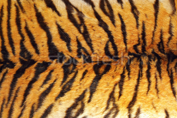 detail of tiger stripes on leather Stock photo © taviphoto