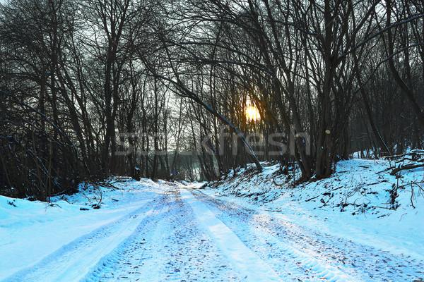 Drogowego lesie świcie pokryty śniegu Zdjęcia stock © taviphoto