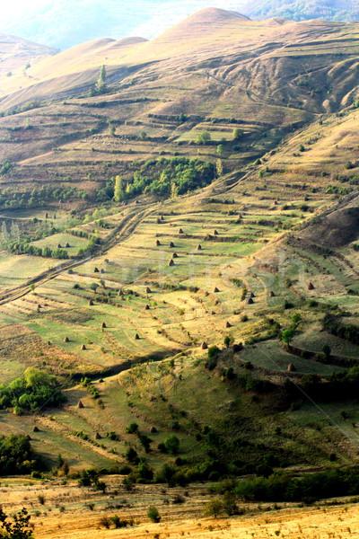 起伏の多い地形 農業 光 美 緑 秋 ストックフォト © taviphoto