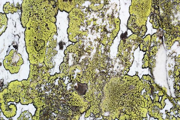 Yosun doku taş detay yeşil beyaz Stok fotoğraf © taviphoto