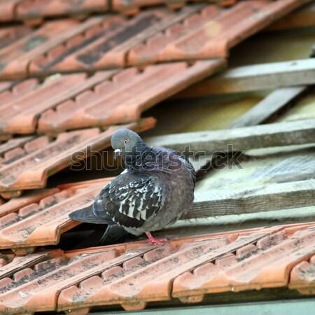Paire toit belle permanent endommagé amour Photo stock © taviphoto