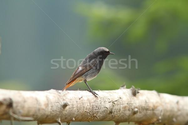 Férfi fekete fa kerítés áll szem Stock fotó © taviphoto