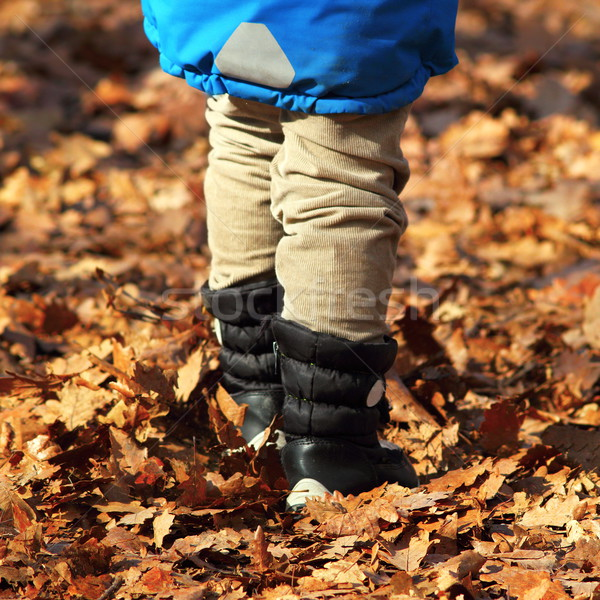 boy walking amongst faded leaves Stock photo © taviphoto