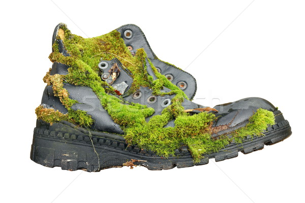 old shoe overgrown with moss Stock photo © taviphoto