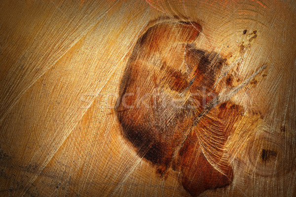 detail of heart wood on felled log Stock photo © taviphoto