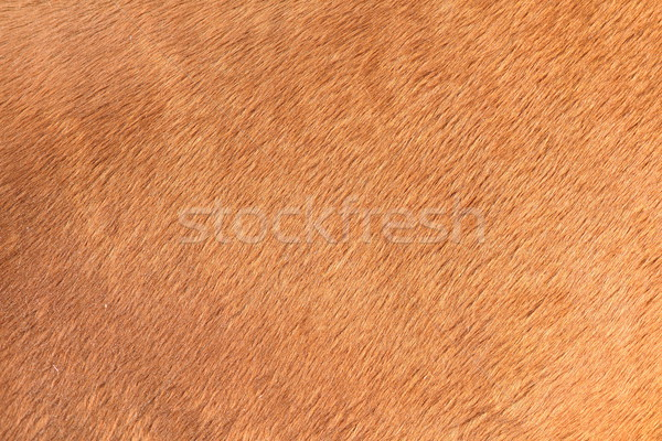 brown texture of horse hair Stock photo © taviphoto