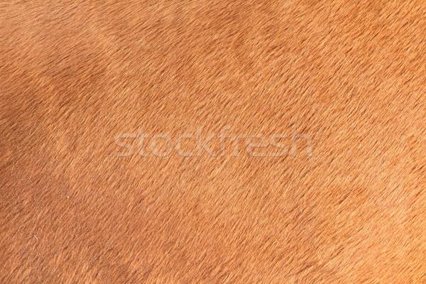 Kahverengi doku at saç detay doğa Stok fotoğraf © taviphoto
