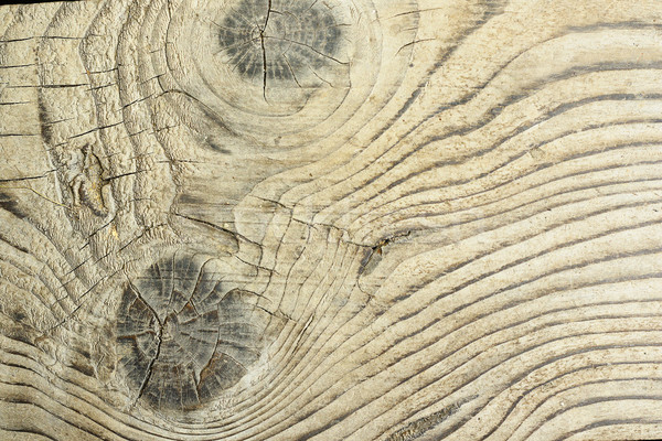 detailed surface of fir plank Stock photo © taviphoto