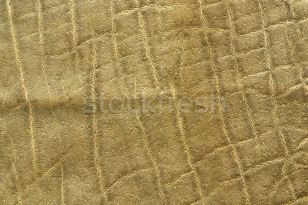 detailed african elephant pelt Stock photo © taviphoto