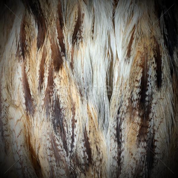 Oehoe gevederte detail natuur patroon mooie Stockfoto © taviphoto