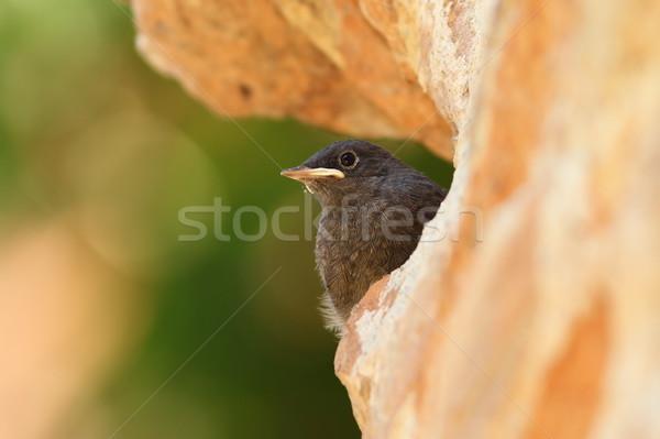 Jonge zwarte nest voorjaar natuur tuin Stockfoto © taviphoto