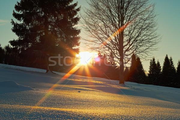 sunset on winter day Stock photo © taviphoto