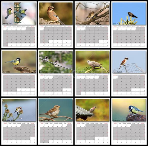 garden birds calendar year 2016 Stock photo © taviphoto