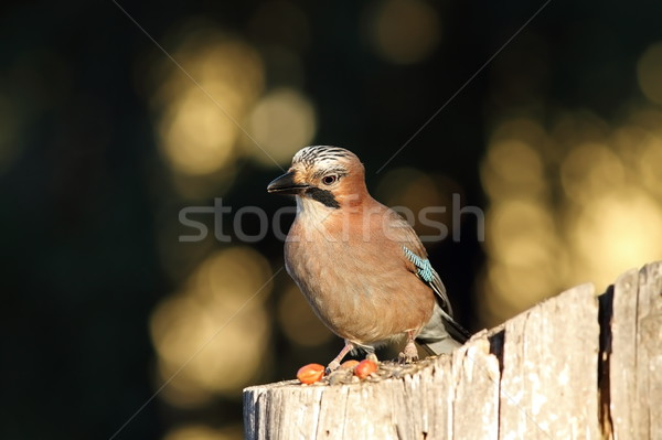 Europeu olhando câmera curioso cara madeira Foto stock © taviphoto
