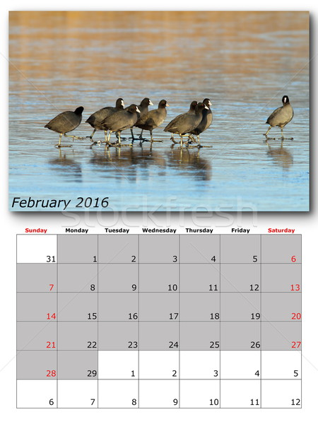 Stock photo: wildlife calendar february 2016