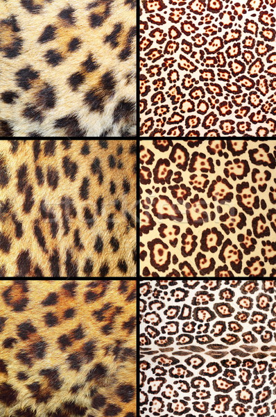 collection of different leopard pelts Stock photo © taviphoto