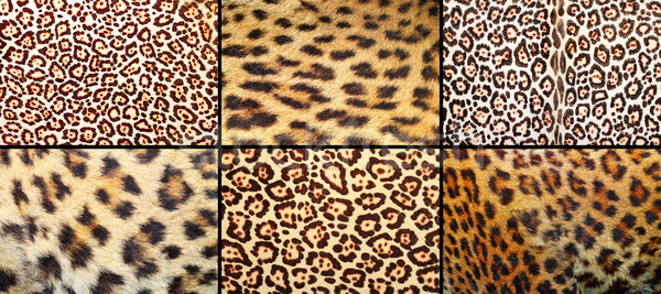 collection of leopard pelt textures Stock photo © taviphoto