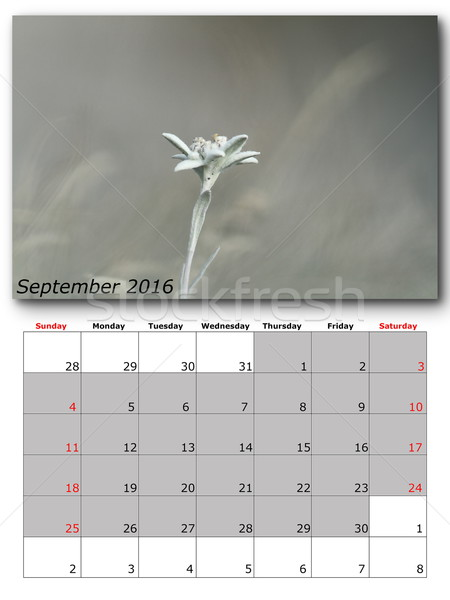september nature calendar page layout Stock photo © taviphoto