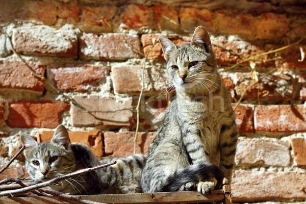 Dois gatinhos belo em pé juntos quente Foto stock © taviphoto