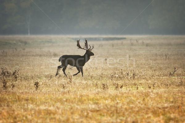 ストックフォト: 鹿 · 美しい · 午前 · 光 · 自然