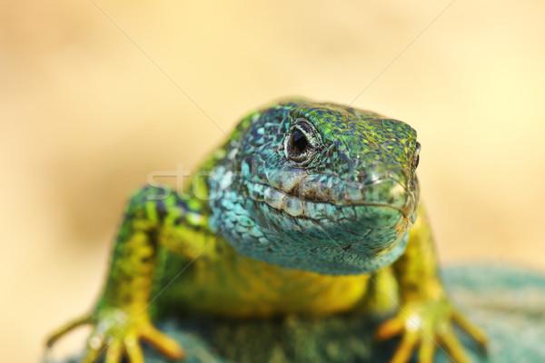 フロント 表示 男性 自然 背景 美 ストックフォト © taviphoto
