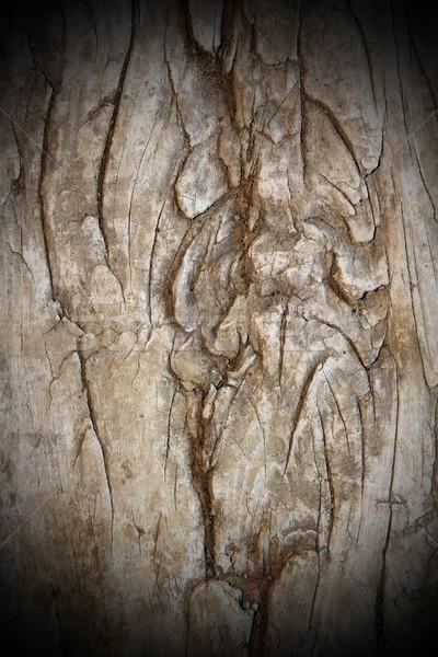 Starych topola tekstury zdjęcie kawałek cięcia Zdjęcia stock © taviphoto