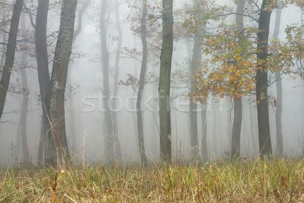 Ağaçlar büyü puslu orman soyut doğa Stok fotoğraf © taviphoto