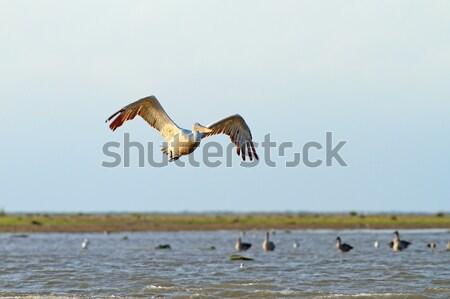 Сток-фото: большой · Flying · воды · небе · красоту