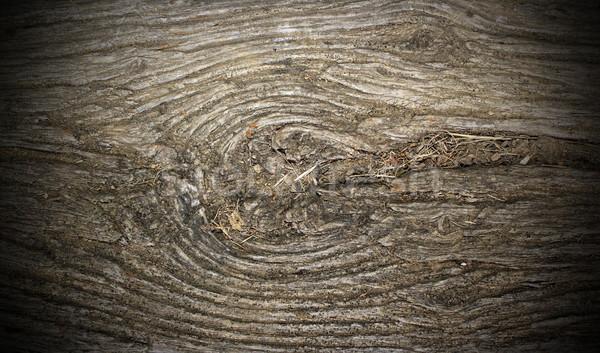 Antica pioppo legno nodo wood texture più Foto d'archivio © taviphoto