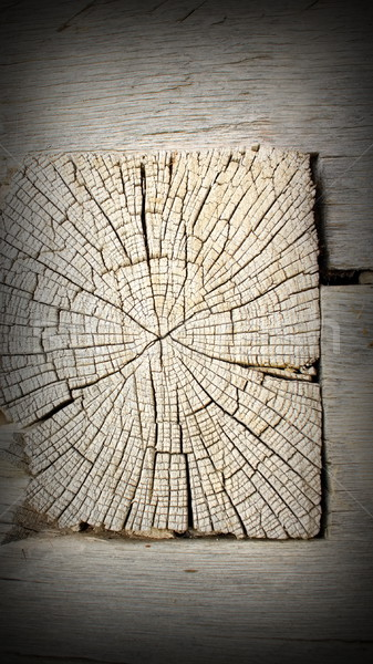 old oak beam section Stock photo © taviphoto