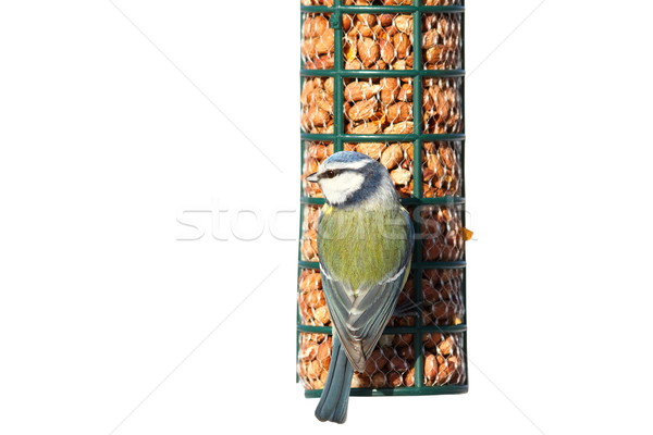 Stock photo: isolated tit eating peanuts