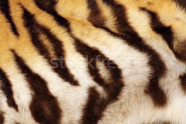 detail on tiger real black stripes Stock photo © taviphoto