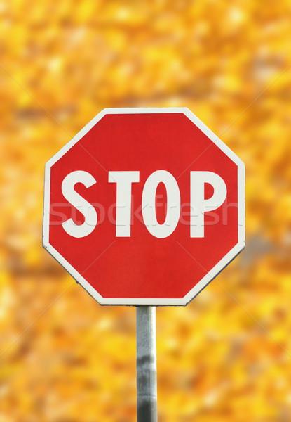 停止 交通標識 赤 森林 自然 ストックフォト © taviphoto