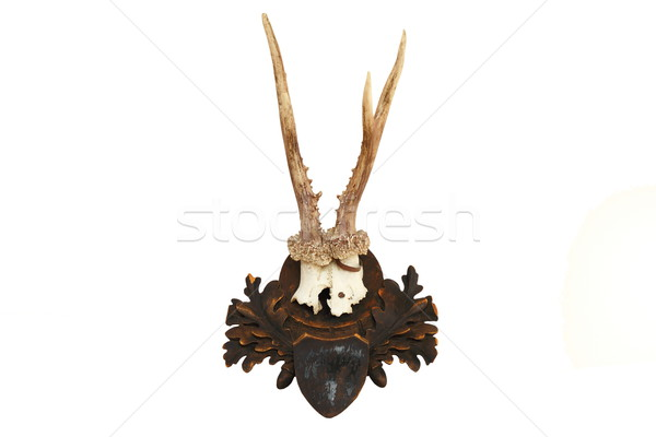 roe deer hunting trophy over white Stock photo © taviphoto