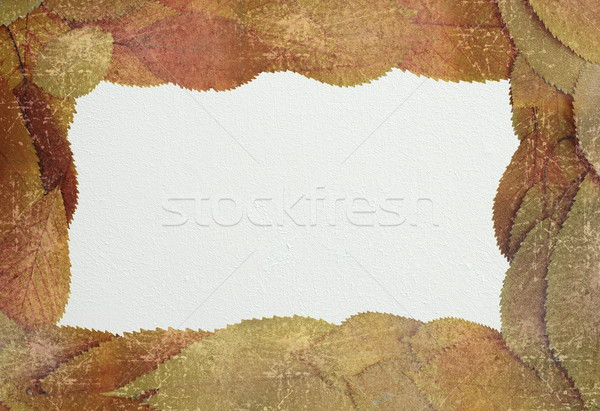 distressed autumn backdrop with place for text Stock photo © taviphoto