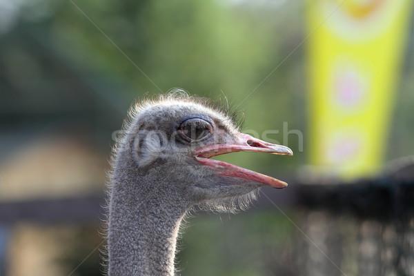 Struzzo ritratto maschio fuori focus occhi Foto d'archivio © taviphoto