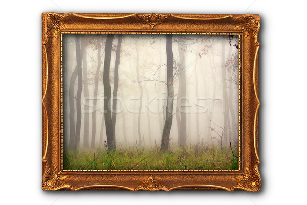Immagine misty foresta pittura frame isolato Foto d'archivio © taviphoto