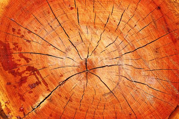 Przekrój wiśniowe drzewo tekstury Zdjęcia stock © taviphoto
