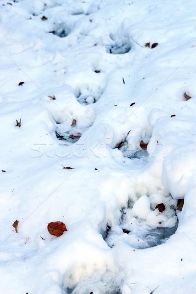 Bruine beer pad track sneeuw natuur ijs Stockfoto © taviphoto