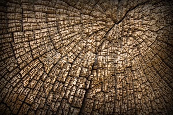 セクション 古い オーク 興味深い テクスチャ ストックフォト © taviphoto