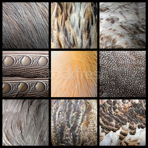 wild birds feathers collection Stock photo © taviphoto