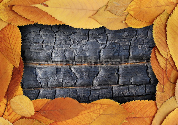 backdrop with gold leaves and burnt wood Stock photo © taviphoto
