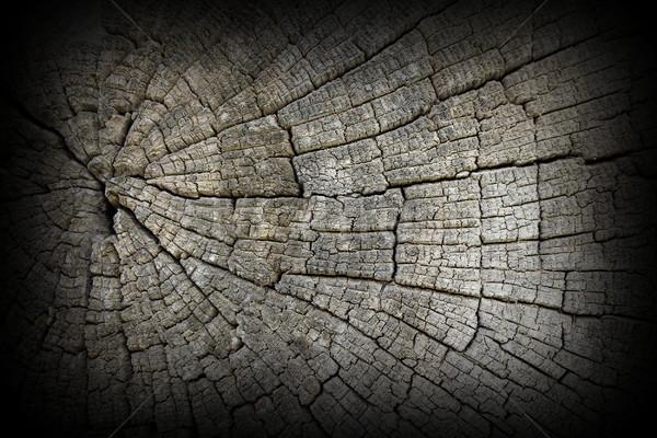 Fisuri vechi stejar lemn suprafata detaliu Imagine de stoc © taviphoto