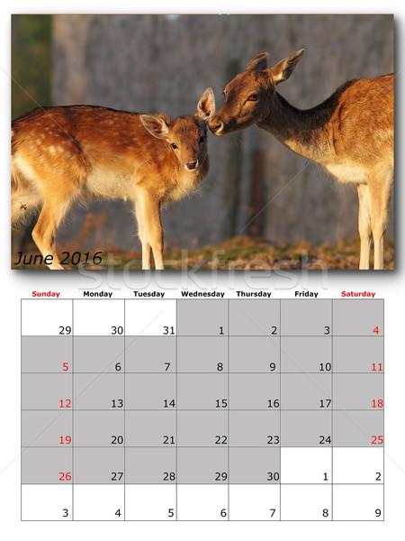 живая природа календаря 2016 печать страница макет Сток-фото © taviphoto